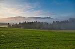 Europa, DEU, Deutschland, Bayern, Allgaeu, Ostallgaeu, Morgenstimmung, Typische Landschaft, Nebel, Blick auf die Alpen, Natur, Umwelt, Landschaft, Jahreszeiten, Stimmungen, Landschaftsfotografie, Landschaften, Landschaftsphoto, Landschaftsphotographie, Wetter, Wetterelemente, Wetterlage, Wetterkunde, Witterung, Witterungsbedingungen, Wettererscheinungen, Meteorologie, Wettervorhersage, <br /> <br /> [Fuer die Nutzung gelten die jeweils gueltigen Allgemeinen Liefer-und Geschaeftsbedingungen. Nutzung nur gegen Verwendungsmeldung und Nachweis. Download der AGB unter http://www.image-box.com oder werden auf Anfrage zugesendet. Freigabe ist vorher erforderlich. Jede Nutzung des Fotos ist honorarpflichtig gemaess derzeit gueltiger MFM Liste - Kontakt, Uwe Schmid-Fotografie, Duisburg, Tel. (+49).2065.677997, ..archiv@image-box.com, www.image-box.com]