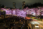 Cherry blossoms in full bloom are illuminated in Roppongi Midtown on April 1, 2016, Tokyo, Japan. On Thursday, the Japan Meteorological Agency announced that Tokyo's cherry trees were in full bloom, three days earlier than usual, but two days later than last year. The spot starts at the pedestrian bridge in Midtown Tower towards to the Hinokicho Park in Roppongi. (Photo by Rodrigo Reyes Marin/AFLO)