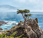 """The iconic """"Lone Cypress"""" stands over the Pacific Ocean on the scenic 17-Mile-Drive, at Pebble Beach adjacent to Carmel-by-the-Sea, California"""
