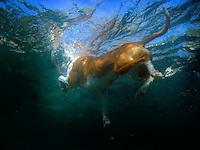 Dog swimming in Lake Tahoe