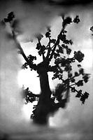 03.2002 <br /> <br /> Tree in a puddle water reflection.<br /> <br /> Reflet d'un arbre dans une flaque d'eau.