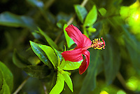 Up close photo of a Hawaii Tropical Botanical Garden flower, Big Island