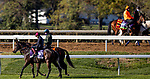 November 3, 2020: Ubettabelieveit, trained by trainer Nigel Tinkler, exercises in preparation for the Breeders' Cup Juvenile Turf Sprint at at Keeneland Racetrack in Lexington, Kentucky on November 3, 2020. Alex Evers/Eclipse Sportswire/Breeders Cup