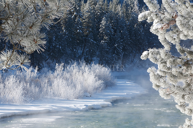 Winter scene on the Blackfoot River in western Montana with frost on the trees and fog over the water