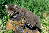 SH32-009z  Cat - kitten playing at 4 weeks
