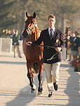 29 September 2010. #565 William Fox-Pitt and Cool Mountain from Great Britain.