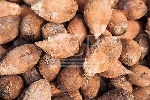 Aldeia Baú, Para State, Brazil. Babassu nuts drying in the sun.