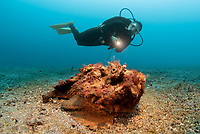 Synanceia is a genus of fish of the family Synanceiidae, the stonefishes, whose members are venomous, dangerous, and even fatal to humans. It is one of the most venomous fish known and are found in the coastal regions of the Indo-Pacific.
