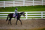 October 30, 2020: Vequist, trained by trainer Robert E. Reid Jr., exercises in preparation for the Breeders' Cup Juvenile Fillies at Keeneland Racetrack in Lexington, Kentucky on October 30, 2020. Alex Evers/Eclipse Sportswire/Breeders Cup