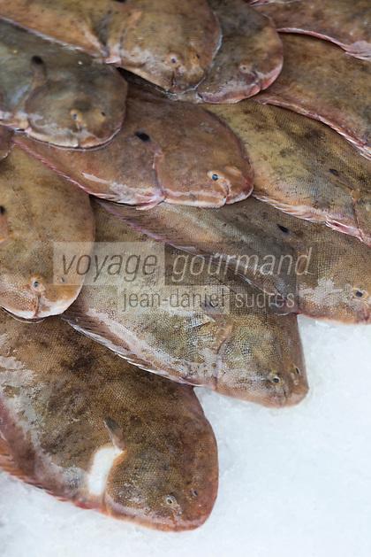 France, Pas-de-Calais (62), Boulogne-sur-Mer:   Soles, Etal des pêcheurs au port de pêche, Vente directe // France, Pas de Calais, Boulogne sur Mer: Sole (fish), Stall fishermen at the fishing port, direct sales