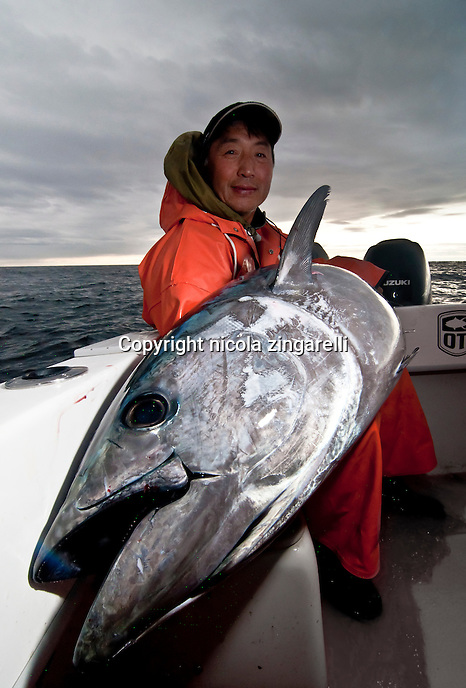 Landing a big Bluefin Tuna, a fish in excess of 100lb is always a challenging task. The grin on the faces of the fishermen shows how rewarding has been such accomplishment