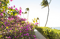 The afternoon sun shines over bougainvillea, palm trees and other greenery that line a path at Wailea Beach, Maui.