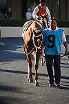 Discreet Dancer in the saddling paddock before winning the 7th race at Gulfstream Park. Hallandale Beach, Florida. 01-07-2012