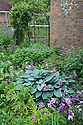 Hostas in oast house garden at Tidebrook Manor, East Sussex, early June.