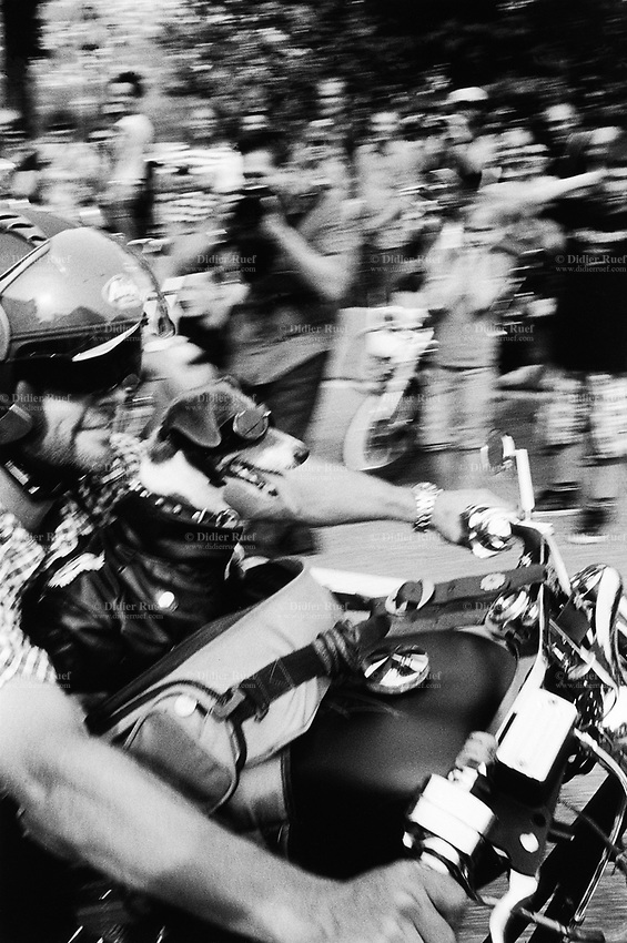 Switzerland. Canton Ticino. Lugano. Swiss Harley days.  Bikers gathering. A biker with his dog during the parade of Harley Davidson motorbikes. 17.07.10 © 2010 Didier Ruef