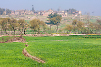 Bhaktapur, Nepal.  Cultivated Fields of Young Rice in Foreground.  Jhaukhel Village in Background.  Brick factories nearby contribute to air pollution haze.