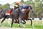 OLDSMAR, FLORIDA - MARCH 12: Destin #7, ridden by jockey Javier Castellano, passing Outwork #3, on his way to break the track record, and win the Lambholm South Tampa Bay Day Derby at Tampa Bay Downs on March 12, 2016 in Oldsmar, Florida (photo by Doug DeFelice/Eclipse Sportswire/Getty Images)