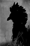 Shadow dancer, (Native American dancer), Santa Fe, New Mexico