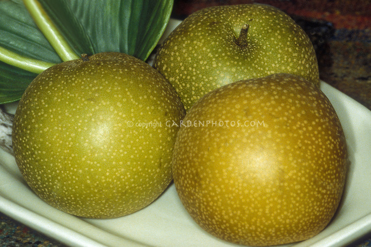 Asian pears 'Hosui'