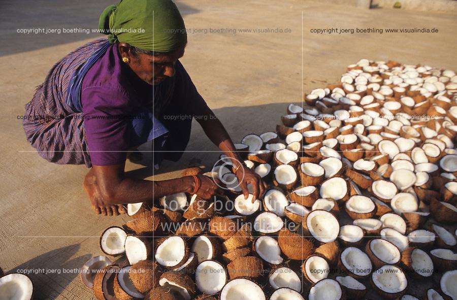 INDIA, Karnataka, Mangalore, woman drying coconut in sun, from coprah the dried meat of coconut kernel later coconut oil will be pressed / INDIEN Karnataka, Trocknung von Kokosnuessen in Sonne auf Plantage bei Mangalore, aus dem trocknen Kokosfleisch, Kopra, wird anschliessend Kokosoel gepresst