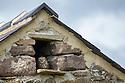 Little Owl (Athene noctua) roosting in stone field barn, Peak District National Park, Derbyshire, UK. August.