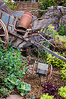Rustic old farm tools, antique garden cart, ornaments,wall, charming old fashioned feel to the garden mixed with vegetables, flowers, Cerinthe major purpurascens, cabbages,  Heuchera, lettuce, herbs, vines, wagon wheel, variegated lemon balm, trellised tree on stone wall, wicker fence, straw mulch, great variety of plantings intermingled.