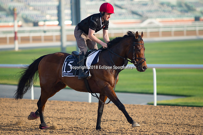 DUBAI,UNITED ARAB EMIRATES-MARCH 29: Washington DC,trained by Aidan O'Brien,exercises in preparation for the Al Quoz Sprint at Meydan Racecourse on March 29,2018 in Dubai,United Arab Emirates (Photo by Kaz Ishida/Eclipse Sportswire/Getty Images)