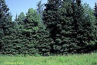 SC01-029z  Plant succession meadow - 3rd stage, evergreen stage - (series - SC01-027z,028z,029z,030z)
