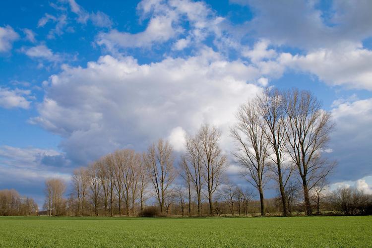 Europa, DEU, Deutschland, Nordrhein Westfalen, NRW, Rheinland, Niederrhein, Weeze, Agrarlandschaft, Baeume, Pappeln, Himmel, Wolkenstimmung, Cumuluswolken, Kategorien und Themen, Natur, Umwelt, Landschaft, Jahreszeiten, Stimmungen, Landschaftsfotografie, Landschaften, Landschaftsphoto, Landschaftsphotographie, Wetter, Himmel, Wolken, Wolkenkunde, Wetterbeobachtung, Wetterelemente, Wetterlage, Wetterkunde, Witterung, Witterungsbedingungen, Wettererscheinungen, Meteorologie, Bauernregeln, Wettervorhersage, Wolkenfotografie, Wetterphaenomene, Wolkenklassifikation, Wolkenbilder, Wolkenfoto....[Fuer die Nutzung gelten die jeweils gueltigen Allgemeinen Liefer-und Geschaeftsbedingungen. Nutzung nur gegen Verwendungsmeldung und Nachweis. Download der AGB unter http://www.image-box.com oder werden auf Anfrage zugesendet. Freigabe ist vorher erforderlich. Jede Nutzung des Fotos ist honorarpflichtig gemaess derzeit gueltiger MFM Liste - Kontakt, Uwe Schmid-Fotografie, Duisburg, Tel. (+49).2065.677997, ..archiv@image-box.com, www.image-box.com]