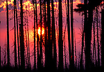 Sun setting behind smoke from forest fire, taken at Saddle Creek Camp near Hat Point between the Imnaha River and Saddle Creek Campground near Hells Canyon.  Dead Larch from previous fire form foreground.