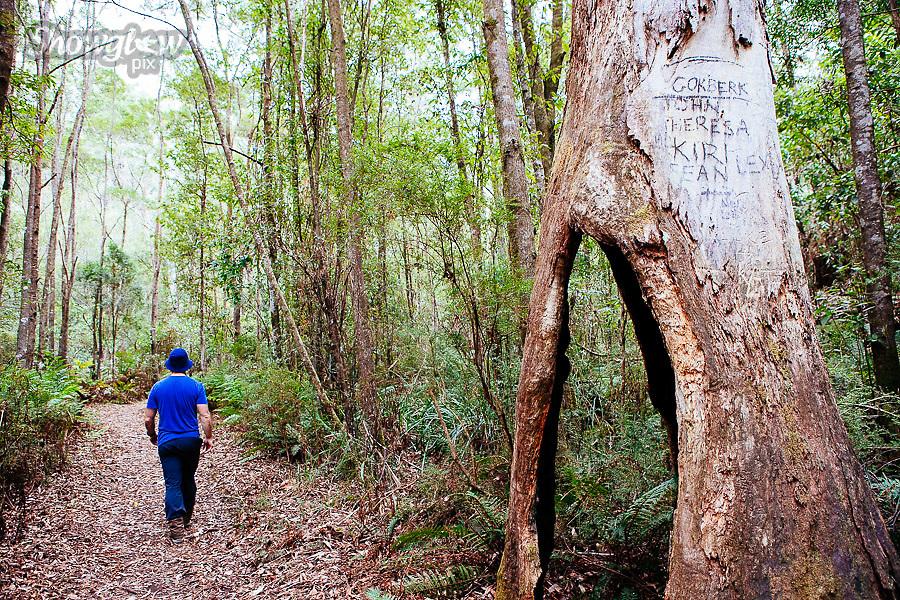 Image Ref: CA290<br /> Location: Sheoak Hike, Great Ocean Road<br /> Date of Shot: 26.04.18
