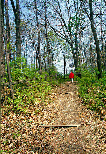 Woman 50-65 years of age walks along nature trail in late summer
