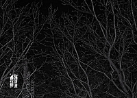 Paris, Baeume in der Nacht, 04.02.2014<br /> <br /> <br /> <br /> <br /> ***HIGHRES AUF ANFRAGE*** ***VOE NUR NACH RUECKSPRACHE***<br />  ***Keine Social_Media Nutzung***<br /> <br /> Engl.: Europe, France, Paris, trees by night, sky, window, light, 04 February 2014<br /> <br /> ***HIGHRES ON REQUEST***PUBLICATION ONLY AFTER CONSULTATION WITH LAIF***<br /> ***No social media use***