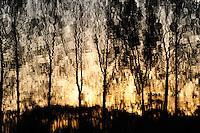 GERMANY Plau, trees reflected in water at lake / DEUTSCHLAND Plau, Baeume spiegeln sich im Wasser eines kleinen Sees