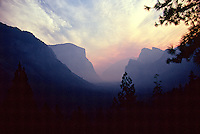 A unique fine art landscape image of Yosemite Valley, in Yosemite National Park, California, viewed from the Tunnel View lookout at sunrise, with the valley shrouded in rose-colored smoke from the nearby Lake Berryessa fire, resulting in a mauve silhouette of El Capitan on the left and the 3 Brothers on the right, with pine boughs in foreground.