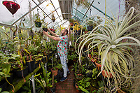 BNPS.co.uk (01202) 558833. <br /> Pic: CorinMesser/BNPS<br /> <br /> Pictured: Mike Clifford at work in one of three greenhouses in his exotic garden. <br /> <br /> A gardener who spent years cultivating some of the world's rarest plants is opening his exotic bungalow garden for charity. <br /> <br /> Mobile home designer, Mike Clifford, began tropical gardening over 20 years ago when he was inspired by a documentary on the subject.  <br /> <br /> Since then, he and his wife Tina, who makes cakes for visitors, have cultivated thousands of plants from across the globe in their quaint English garden.