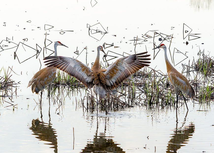 This image is one of 23 photographs recognized in the 7th Annual Pollux Awards, an international competition organized by the Worldwide Photography Gala Awards in Kent, England.