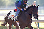 May 17, 2013, morning activities at Pimlico on Friday before the Preakness. Preakness contender Itsmyluckyday gallops at Pimlico Race Course in Baltimore, MD. (Joan Fairman Kanes/Eclipse Sportswire)