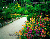 Tom Mackie, LANDSCAPES, LANDSCHAFTEN, PAISAJES, FOTO, photos,+4x5, 5x4, bloom, blooming, blossom, blossoms, botanic, botanical, botany, color, colorful, colour, colourful, County Wicklow,+Eire, Enniskerry, EU, Europa, Europe, European, flower, flowerbed, flowers, footpath, garden, gardening, gardens, gardensgal+lery, horizontal, horizontally, horizontals, Ireland, Irish, lane, large format, path, pathway, Powerscourt Gardens, primula,+spring, springtime,4x5, 5x4, bloom, blooming, blossom, blossoms, botanic, botanical, botany, color, colorful, colour, colour+,GBTM030289-1,#L#, EVERYDAY ,Ireland
