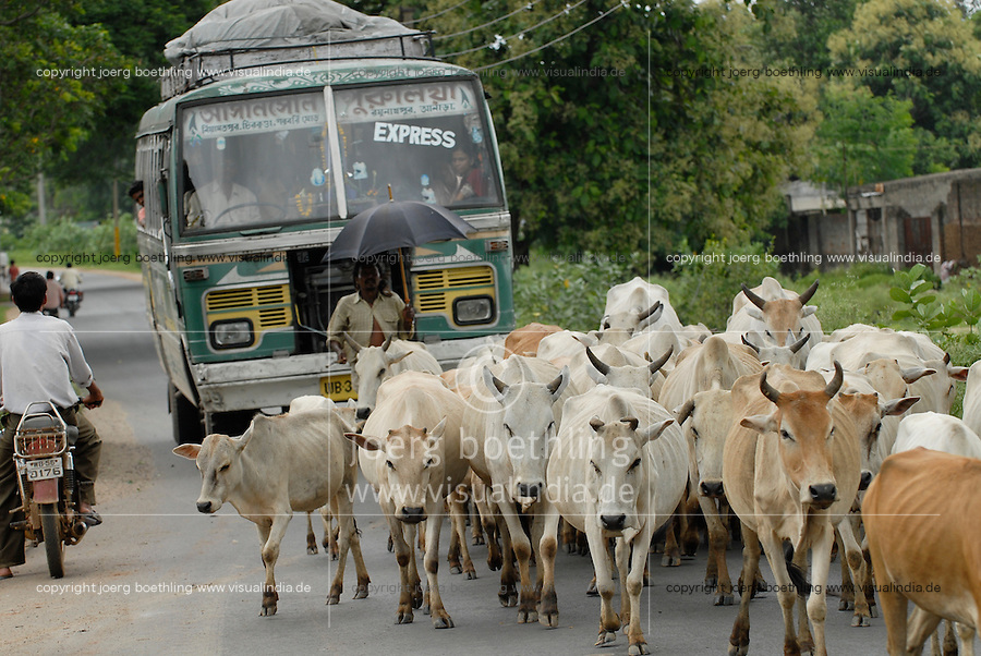 "Asien Suedasien Indien Westbengalen , Kuhherde blockiert den Strassenverkehr - Transport Infrastruktur xagndaz | .South asia India Westbengal , cow herd blocks road  - transport infrastructure .| [ copyright (c) Joerg Boethling / agenda , Veroeffentlichung nur gegen Honorar und Belegexemplar an / publication only with royalties and copy to:  agenda PG   Rothestr. 66   Germany D-22765 Hamburg   ph. ++49 40 391 907 14   e-mail: boethling@agenda-fototext.de   www.agenda-fototext.de   Bank: Hamburger Sparkasse  BLZ 200 505 50  Kto. 1281 120 178   IBAN: DE96 2005 0550 1281 1201 78   BIC: ""HASPDEHH"" ,  WEITERE MOTIVE ZU DIESEM THEMA SIND VORHANDEN!! MORE PICTURES ON THIS SUBJECT AVAILABLE!!  ] [#0,26,121#]"