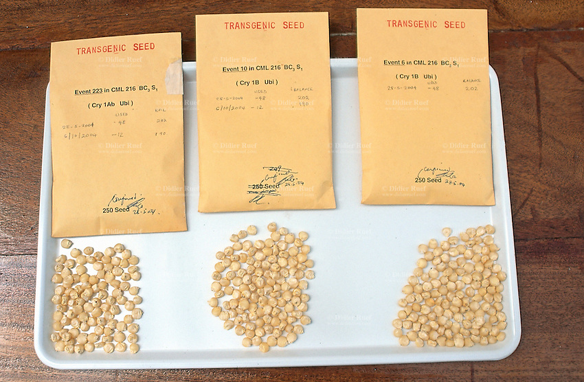 Kenya. Nairobi Province. Nairobi. Kenya Agricultural Research Institute (KARI). As part of a program to improve food security in Kenya, the Insect Resistant Maize for Africa (IRMA) project is testing BT Maize in a Bio Safety Level 2 Greenhouse complex at the National Agricultural Research Laboratory (NARL). The BT Maize is a genetically modified (GM) maize. Transgenic seeds. © 2004 Didier Ruef