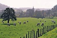 Europe/France/89/Yonne/Env de Vezelay: Pâturages et troupeau de bovins de race charolaise à Asquins