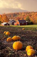 AJ1043, Vermont, Pumpkin patch in foreground of a red farm with early morning mist in the fall in Danby Four Corners.