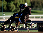 OCT 29: Breeders' Cup Distaff entrant Wow Cat, trained by Chad C. Brown,  at Santa Anita Park in Arcadia, California on Oct 29, 2019. Evers/Eclipse Sportswire/Breeders' Cup