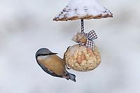 Kleiber, Spechtmeise, selbstgemachtes Vogelfutter, am Nuss-Säckchen, Nusssäckchen, Nuß-Säckchen, Nussäckchen, Erdnüsse, Erdnuss-Säckchen, Erdnusssack, Vogelfütterung, Fütterung, Winter, Schnee, Sitta europaea, Nuthatch, bird's feeding, Sittelle torchepot