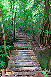 Wooden Rainforest Bridge, Thailand