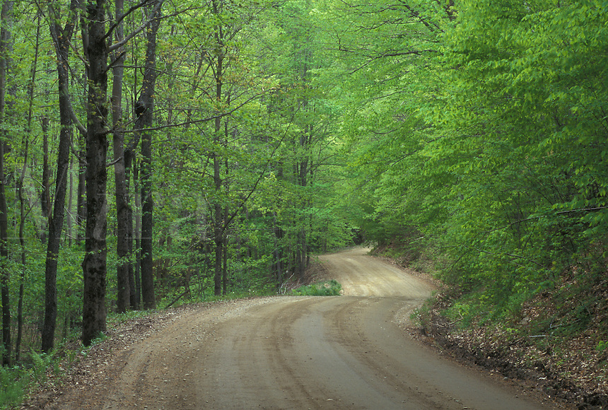 country road, Vermont, VT, A dirt road winds through a forest of light green trees in Reading in the early spring.