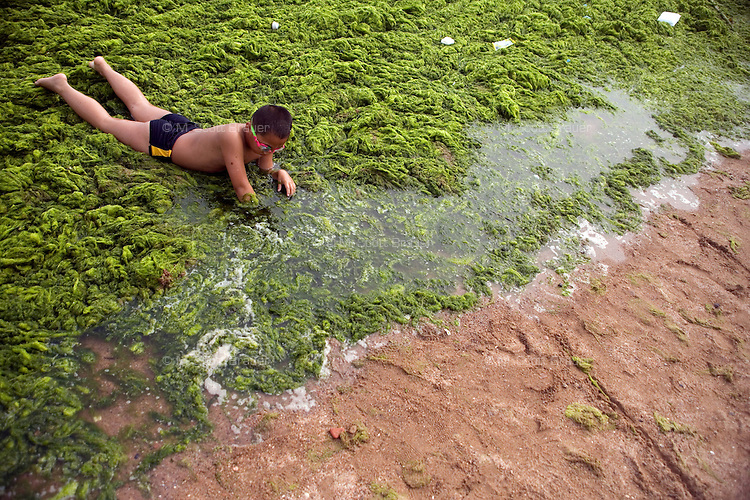 A young boy crawls through algae-covered water off the Number 6 Bathing Beach on Qingdao Bay in Qingdao, Shandong, China.  ..Qingdao is the host of the sailing events for the 2008 Summer Olympics. Algae blooms like this have become common in inland lakes in China, often caused by high pollution in bodies of water.  The city is asking for help and forcing residents to take part in the cleanup effort before the Olympic events..