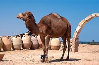Kamel, Guellala, Djerba, Tunesien