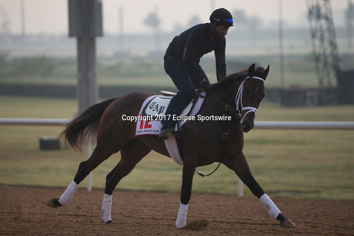 DUBAI,UNITED ARAB EMIRATES-MARCH 23: Neolithic,trained by Todd Pletcher,exercises in preparation for the Dubai World Cup at Meydan Racecourse on March 23,2017 in Dubai,United Arab Emirates (Photo by Kaz Ishida/Eclipse Sportswire/Getty Images)